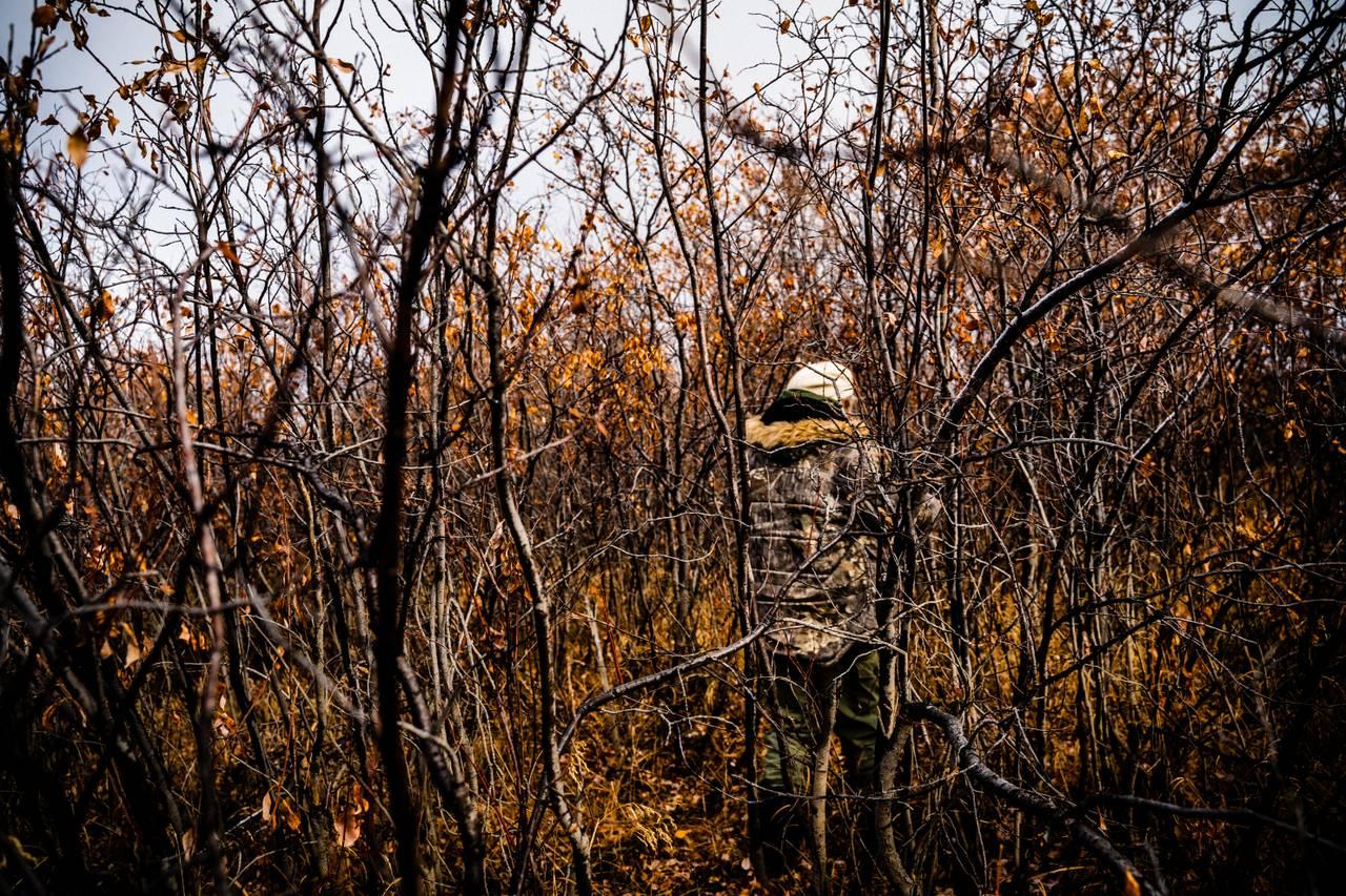 Sergey Zimov går gjennom tett buskas.
