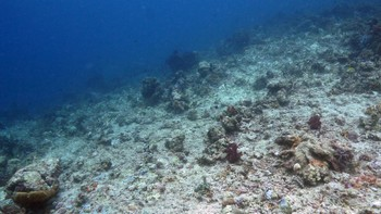 This photo taken in March 20, 2012 shows damaged coral reefs in the waters of Tatawa Besar, Komodo islands, Indonesia.