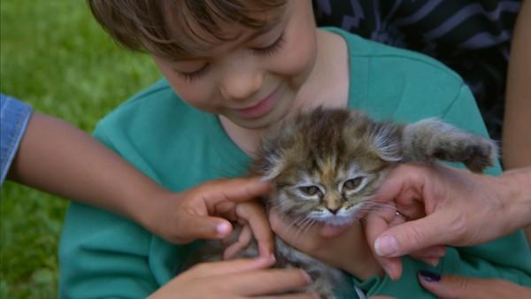 Norsk dramaserie. (4:12) Elias' katt.Elias har så veldig lyst på katt, men hva sier mamma til det?