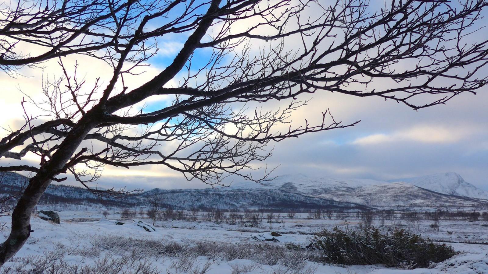 Det første snødekket på Minilldalsmyrene og Høghø