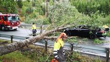 På gamle E18 ved Hærland i Indre Østfold har et tre blåst over veien og truffet en bil.
