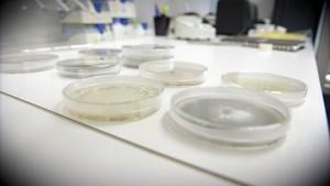 Brennpunkt: Bakterietrusselen