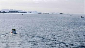 Det gode skreiinnsiget lokker både yrkes- og fritidsfiskere på sjøen.