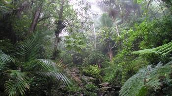 Regnskogen El Yunque i Puerto Rico