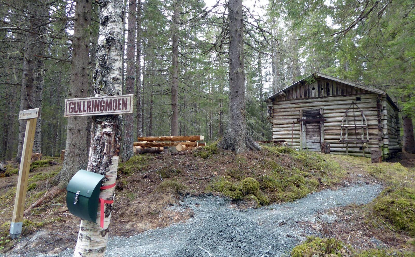 Gullringmoen skogkoie i Høybydalen, Hommelvik