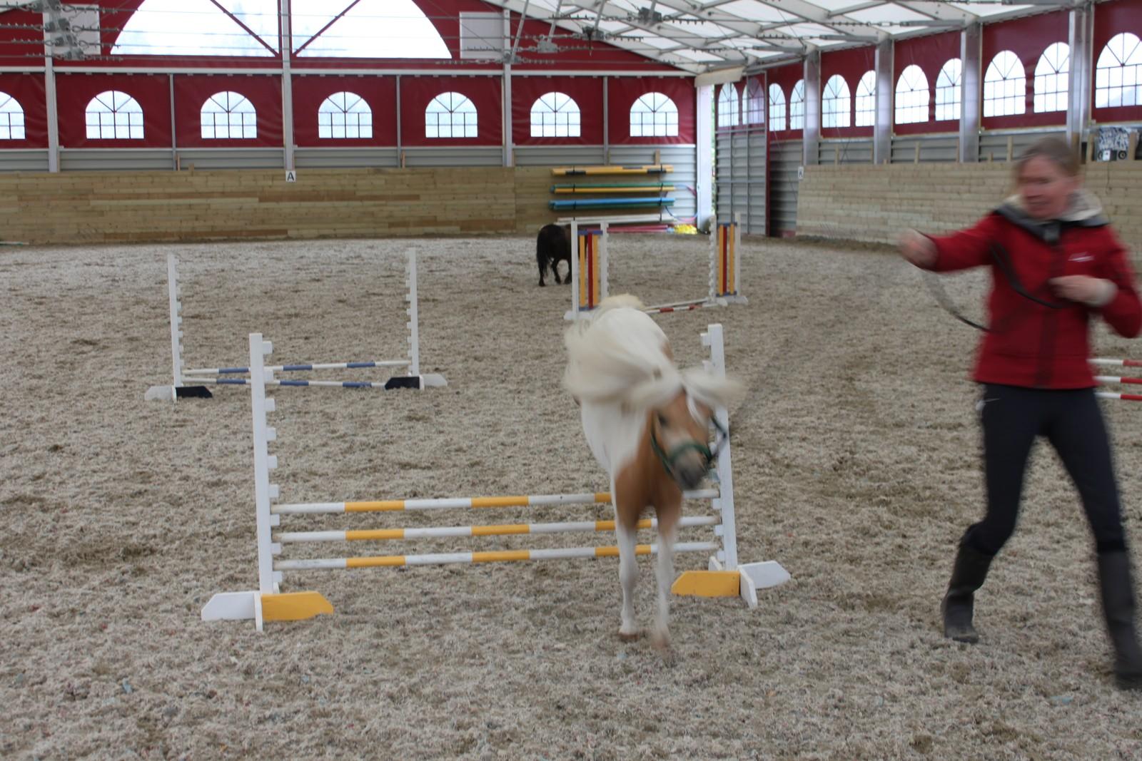 I SPRANGET: Hesten reiv ikkje porten éin einaste gong.