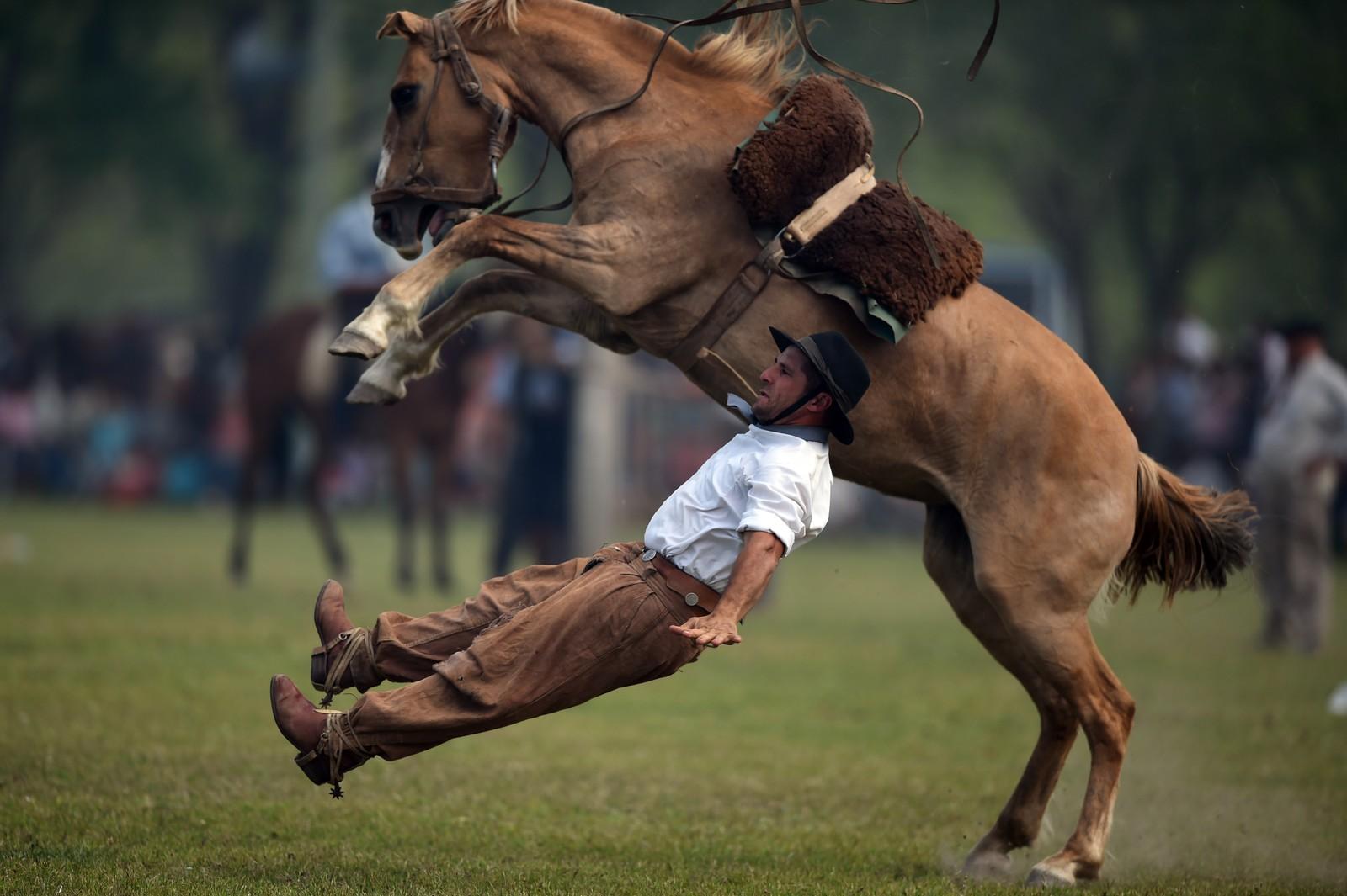En cowboy kastes av hesten under en rodeo-forestilling i San Antonio de Areco, Argentina.