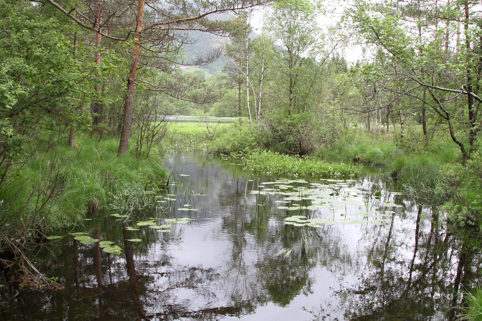 Elleflåttjørna i Vindafjord.