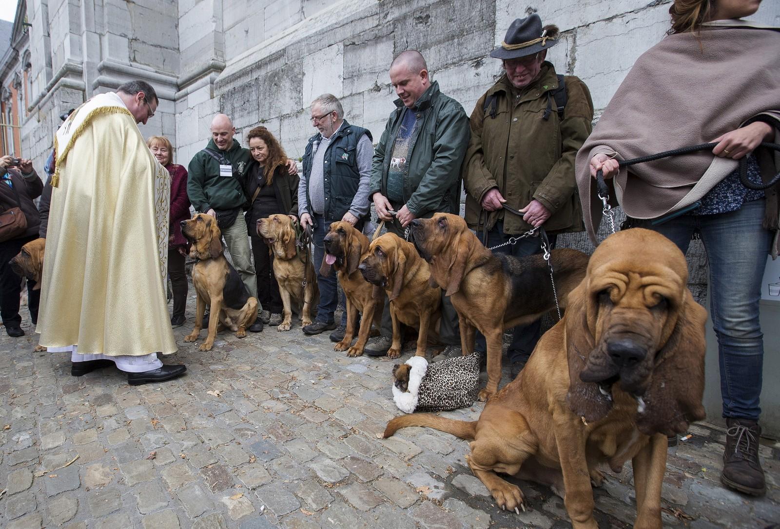 Den belgiske presten Philippe Goosse velsigna disse hundene under en seremoni denne uka. Det hele foregikk under feiringa av den dyreglade helgenen St.Hubert.