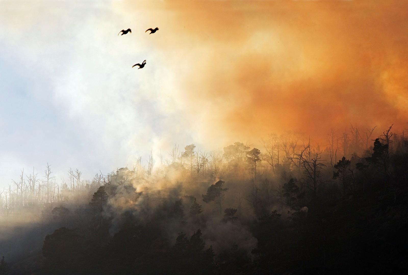 """John Sirevåg ble vinner av kategorien """"Truet natur"""" med dette bildet."""