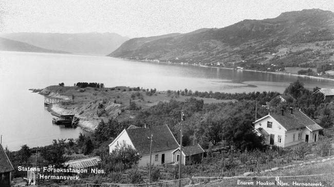 I 1900 hadde Leikanger over 11.000 frukttre. Her har vi utsyn frå Njøs mot Nokkaneset og med Leikanger i bakgrunnen. Foto: Håkon Njøs. Eigar: Fylkesarkivet i Sogn og Fjordane.