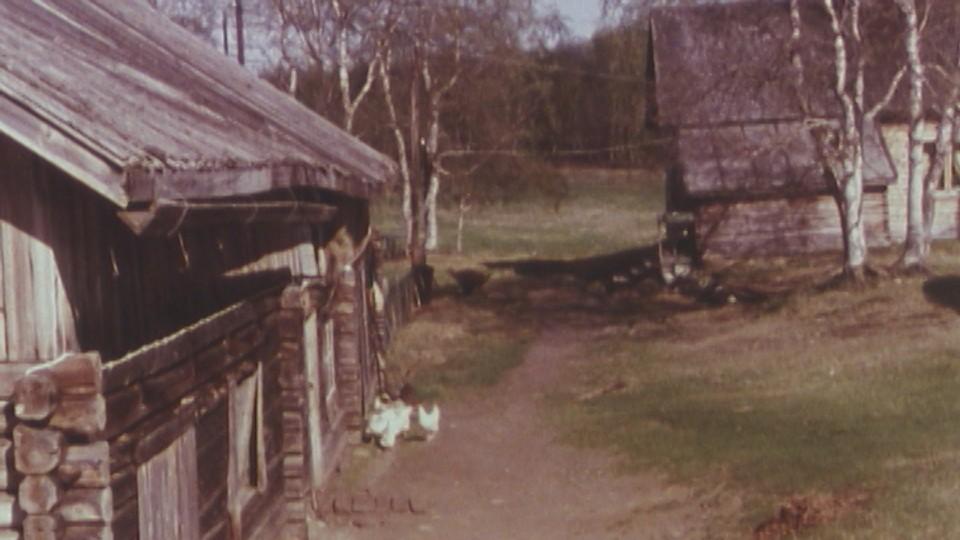 Vår, sommer og vinter i Pasvikdalen
