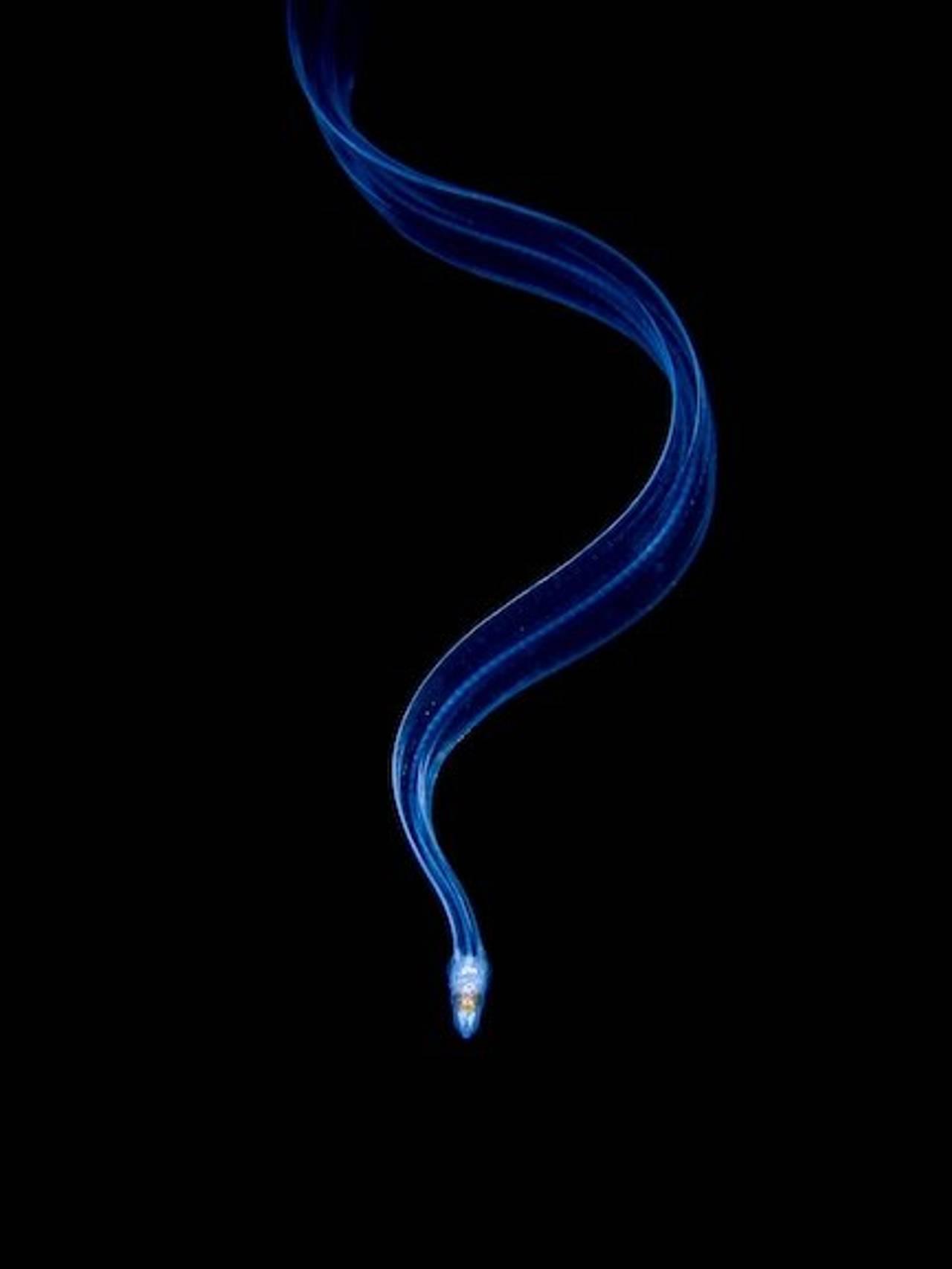En fisk svømmer nedover.