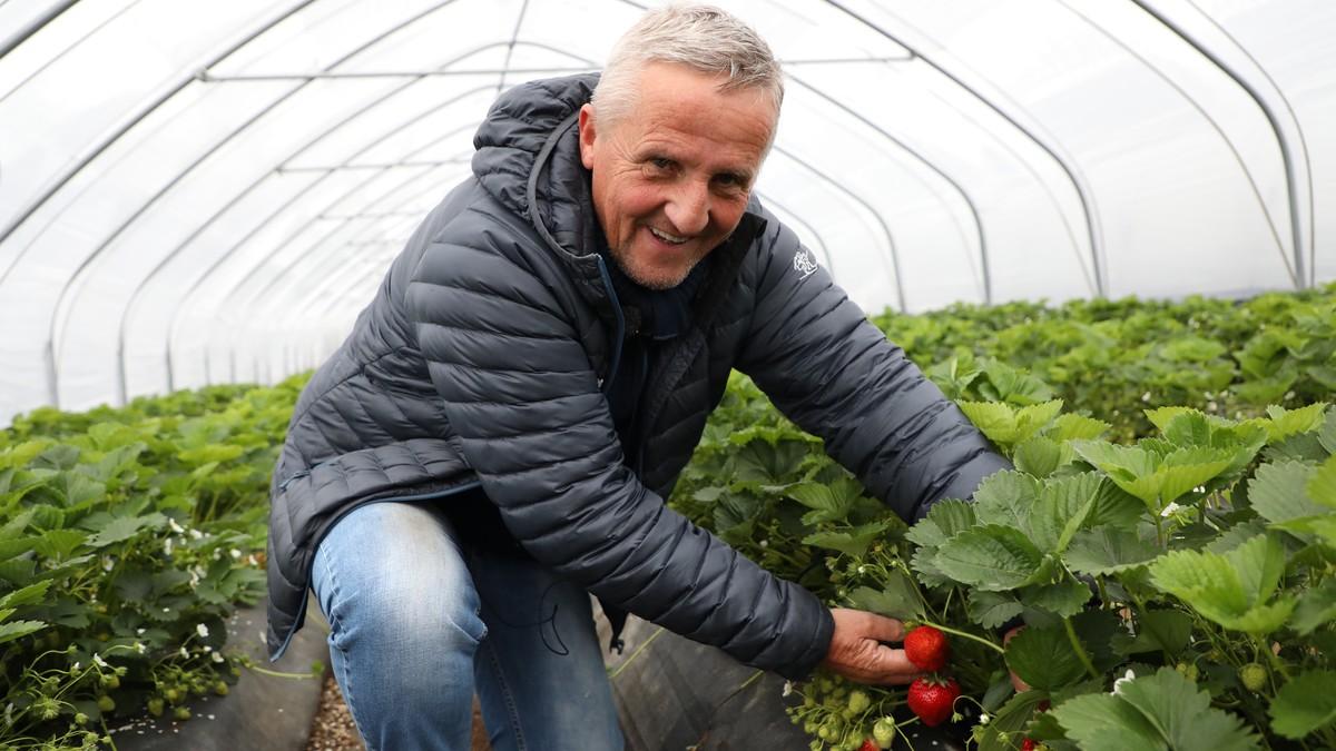 I løpet av denne sesongen ventar jordbærbonde Geir Joa å selja om lag 300.000 korger jordbær.