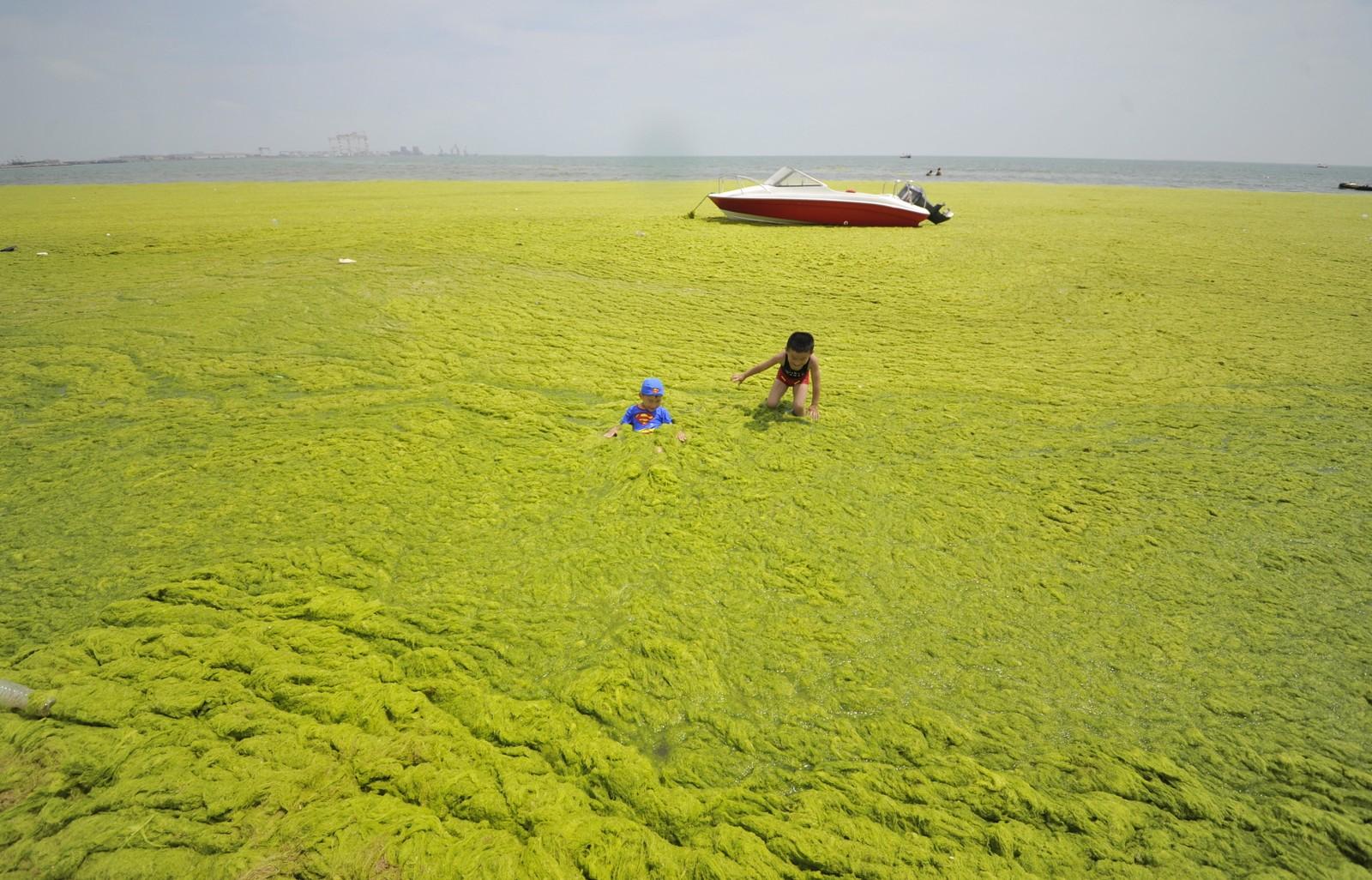 Leking ved algedekket strand i Haiyang i Kina.