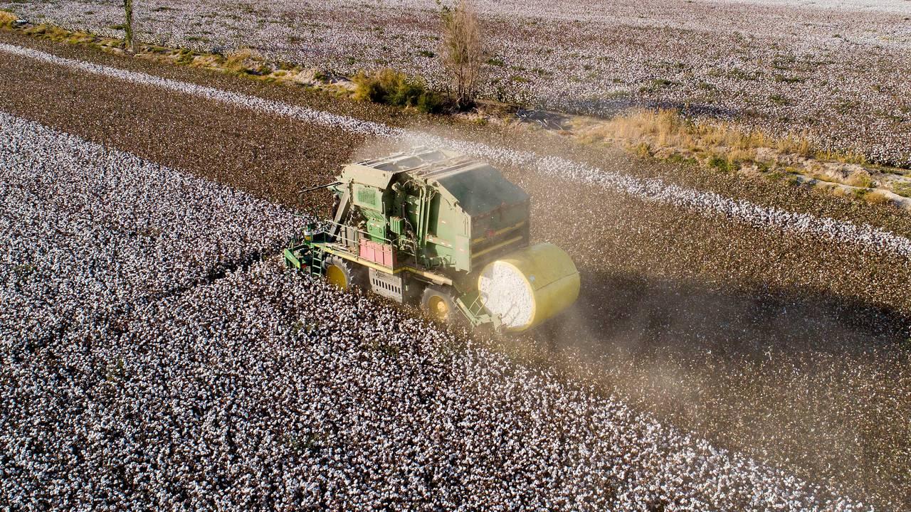 Bomullsproduksjon i Hami i Xinjiang. Bildet er tatt 9. oktober 2020.