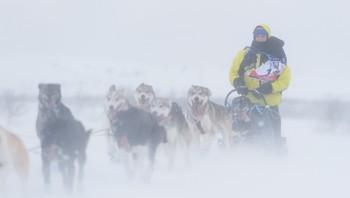 Finnmarksløpet 2015