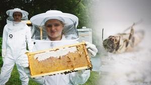 Viten og vilje: Insektene dør