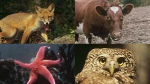 Vi ser på dyr