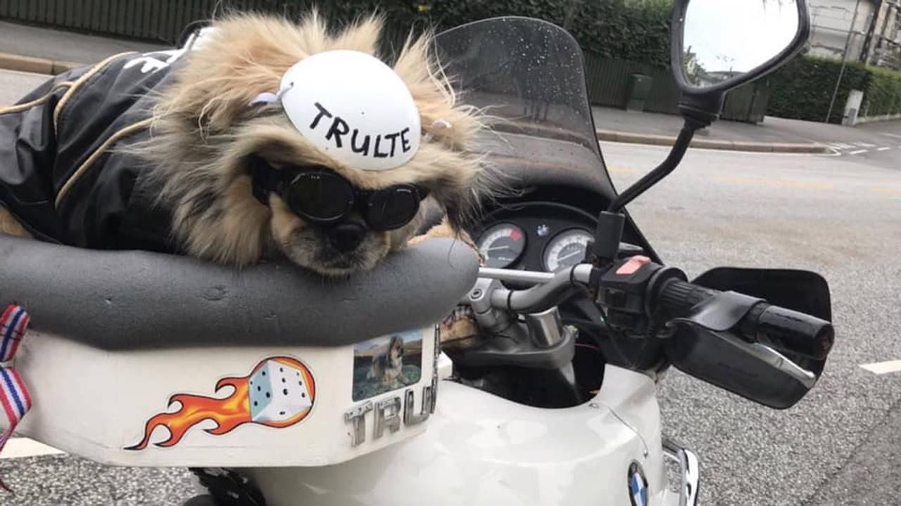 Trulte har hvit hjelm når hun kjører motorsykkel.