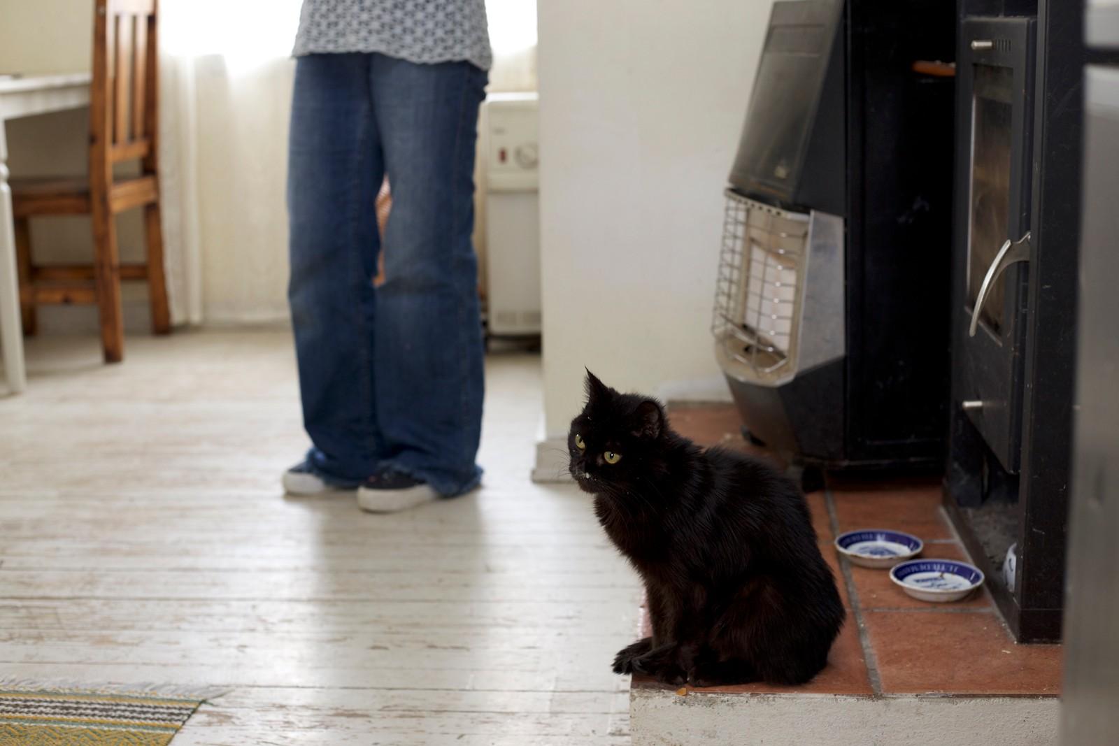 Katten Bille er ti år gammel og har vært veldig syk veldig lenge. Men hun nekter å dø. - Hun har brukt opp alle sine katteliv og mere til. Hun inspirerer meg, sier Irina.