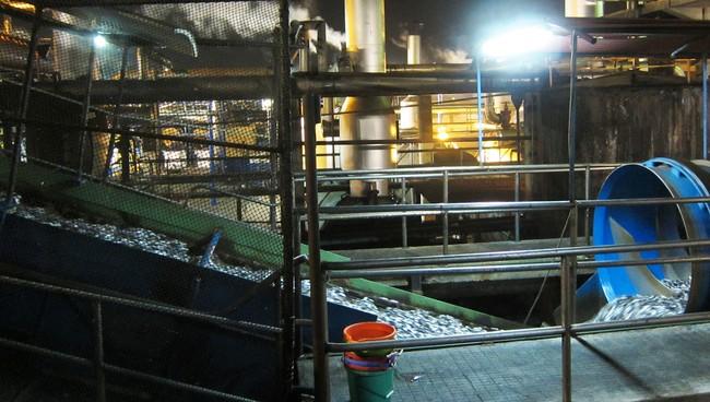 Fiskeoljeproduksjon i Peru
