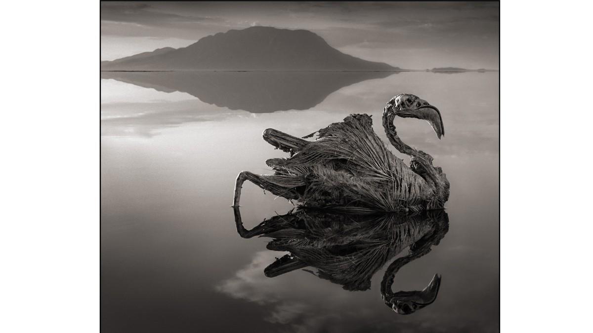 Innsjøen som gjør dyr til stein
