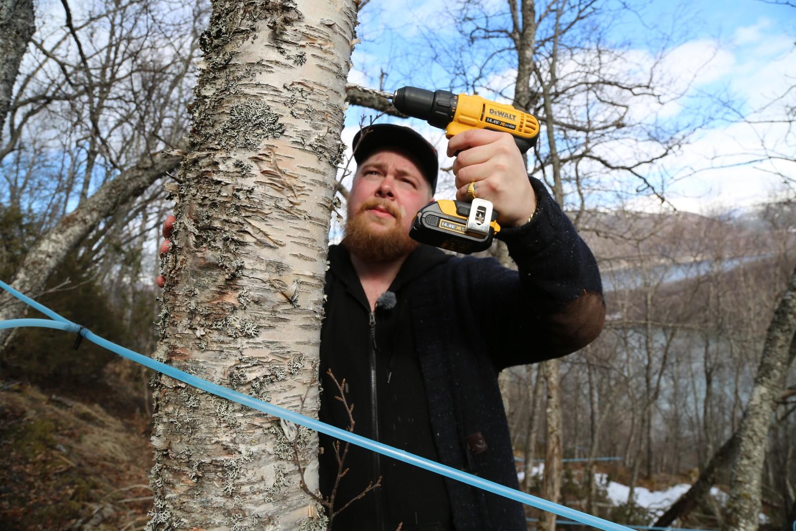 Lars Andreas Vik fra Saltdal har denne våren boret hull i over 460 bjørketrær for å lage bjørkesirup.
