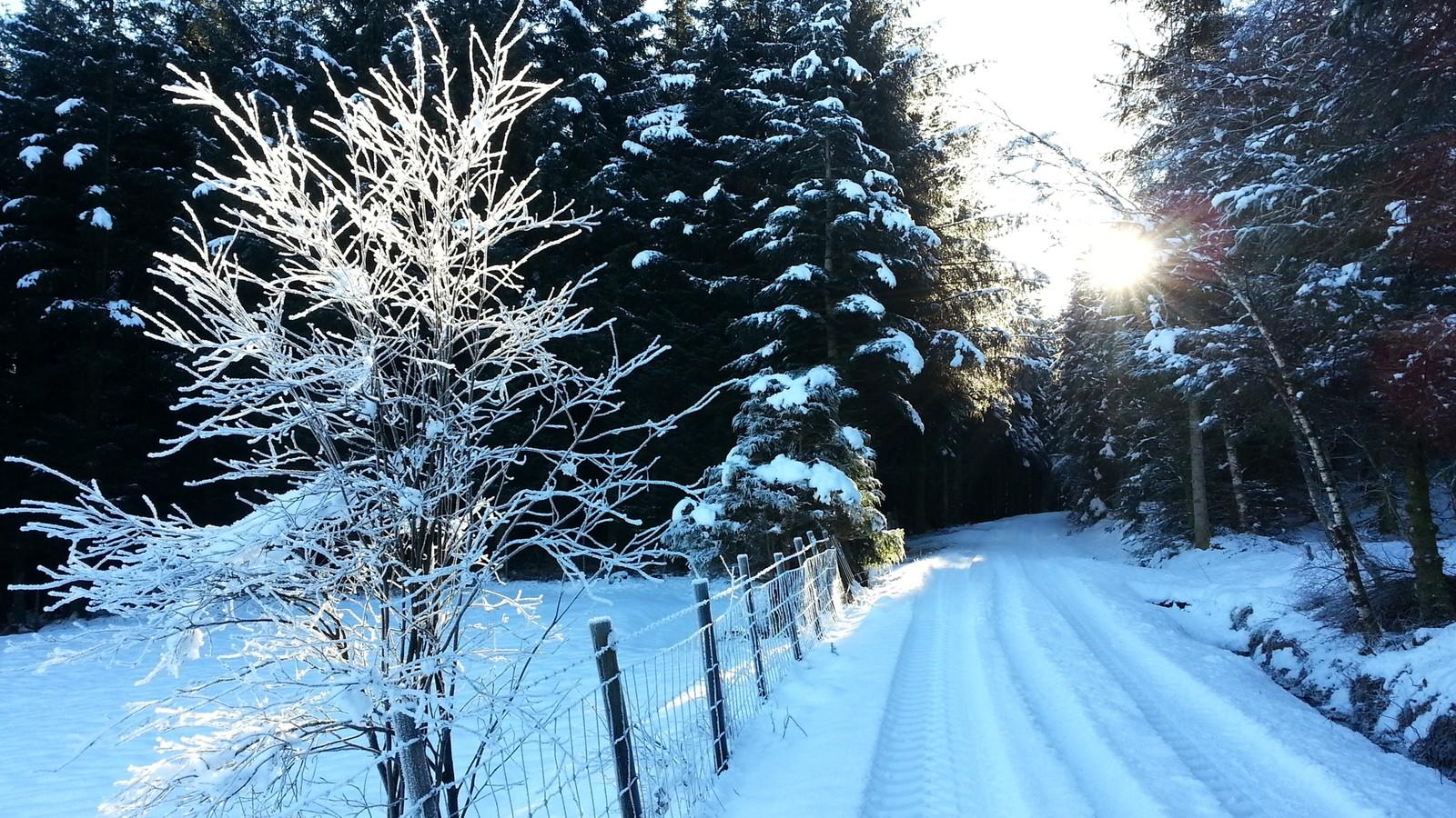 Vinter i Kringlelia på Kyllingstad i Gjesdal.