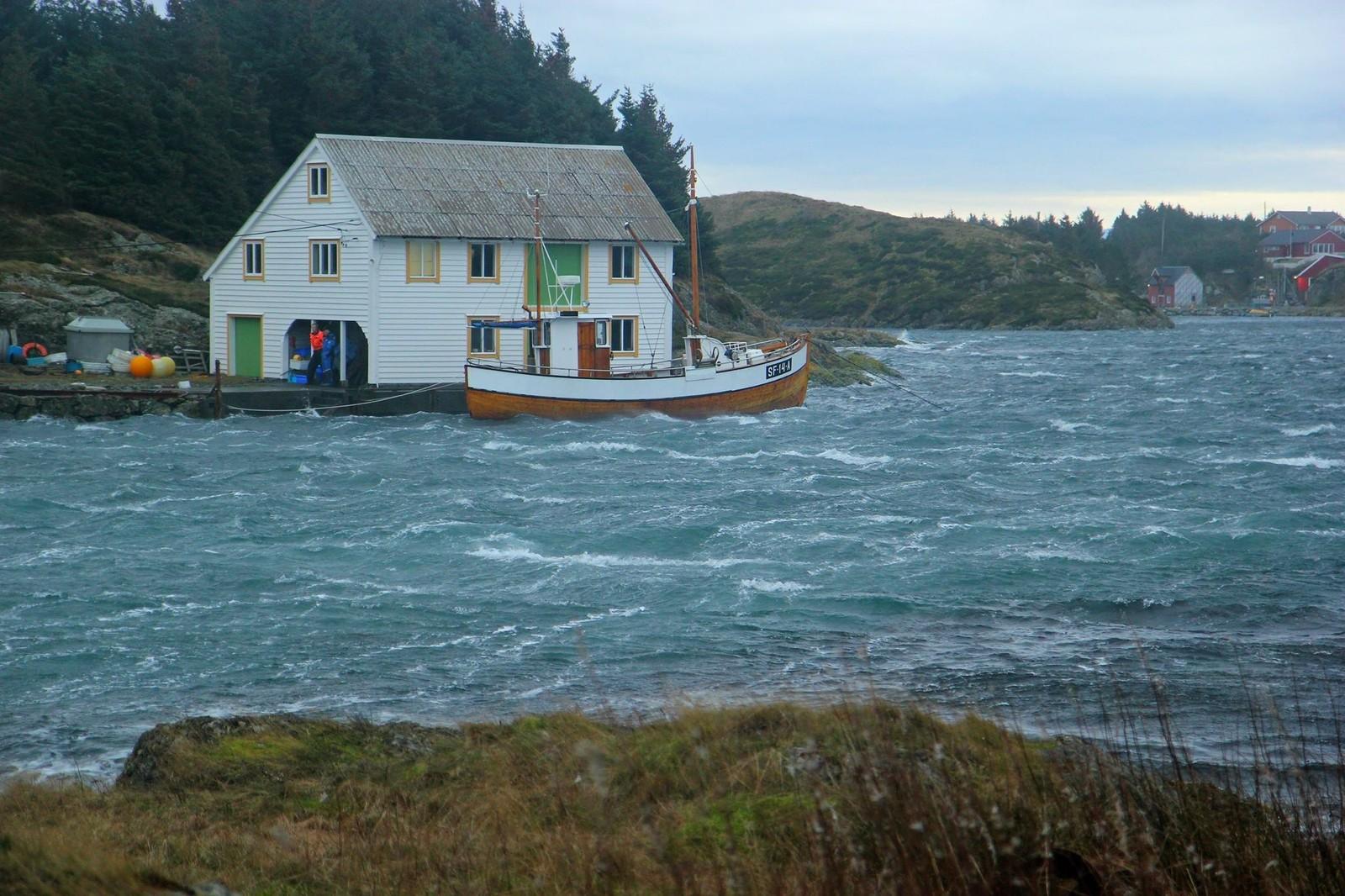 Det bles òg godt innomskjærs og folk er uroa for båtane sine. Her er ein båteigar ute for å passe på at fortøyingane held.