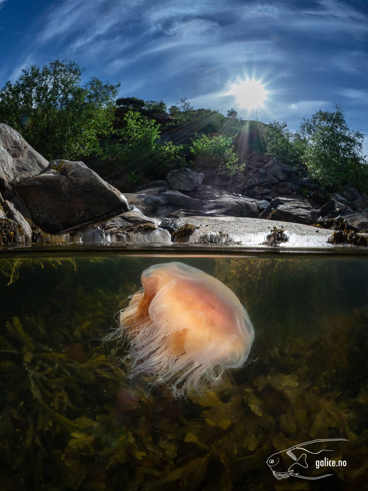 Brennmanet svømmer under havoverflaten.
