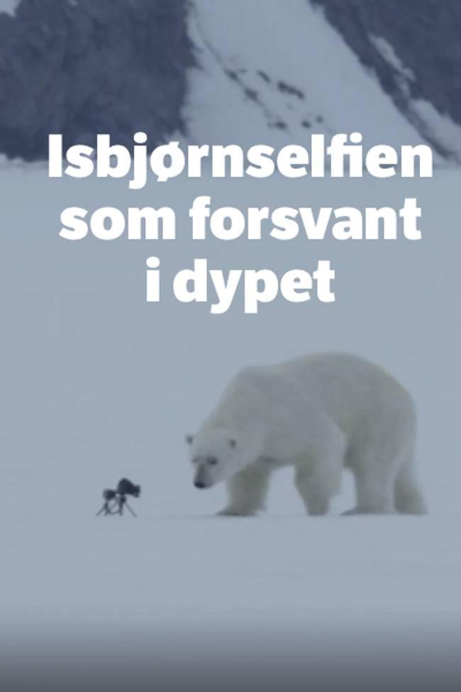 Isbjørn ser på kamera