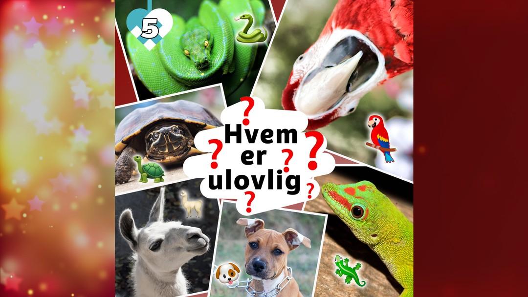 Hvilke dyr er ulovlig i Norge? Dagens kalender luke