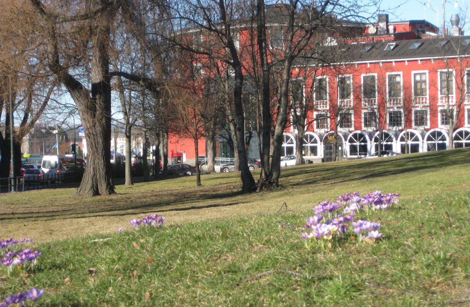 Vårlig ved Studentersamfundet i Trondheim