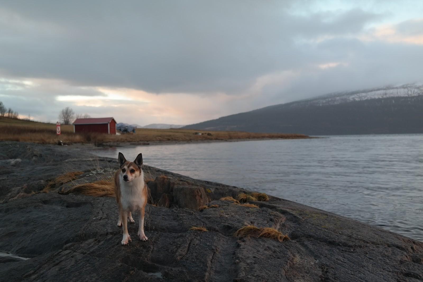 Ved Ranfjorden. Frida i fjæra.