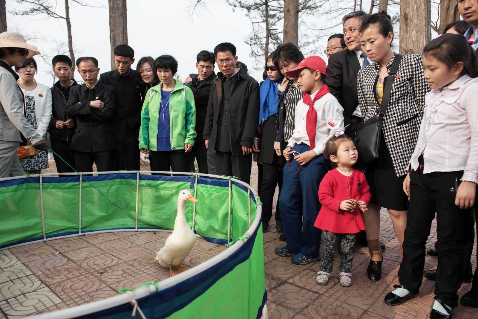I dyrehagen i Pyongyang kan man konkurrere om å kaste en ring rundt halsen på ei gås.