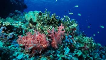 Korallar på Great Barrier Reef