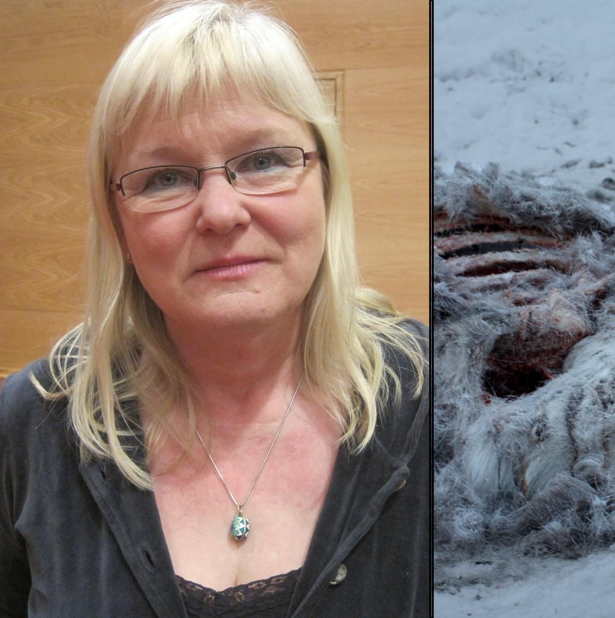 Reinkrisen Darlig Handtert Nrk Troms Og Finnmark Lokale Nyheter Tv Og Radio
