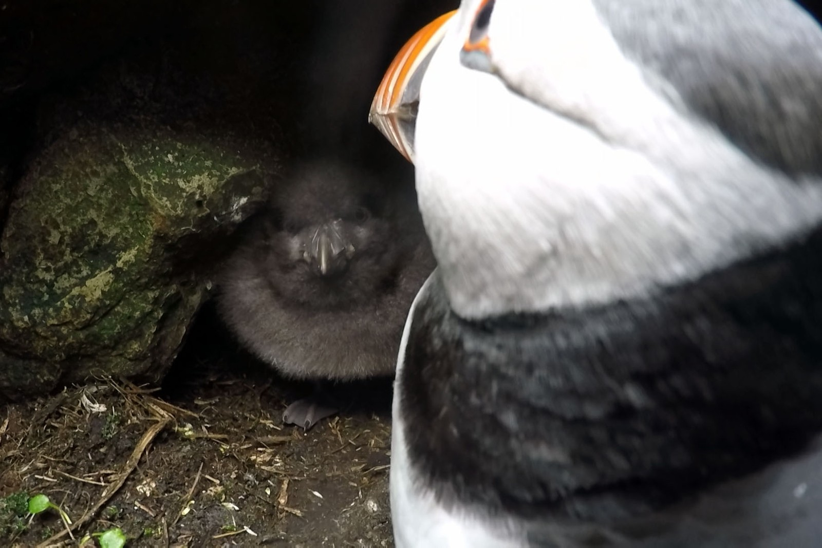 Ikke blant de teknisk beste bildene, men likevel et blinkskudd. NRK har for første gang vist bilder fra innsiden av en lundehule. Bilder som forskere og andre aldri tidligere har sett.