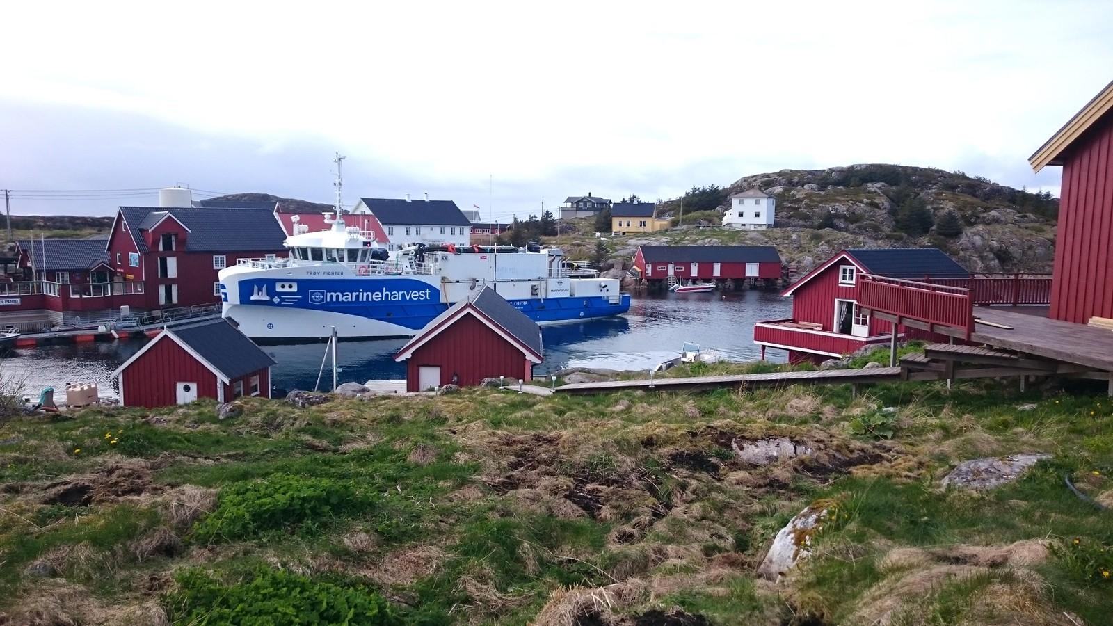 Bogøyvær, Frøya