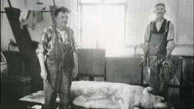 På Harastølen heldt dei eigne griser, og slaktinga tok dei seg og av.