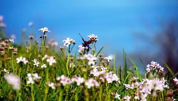 Sommerfugl i blomstereng