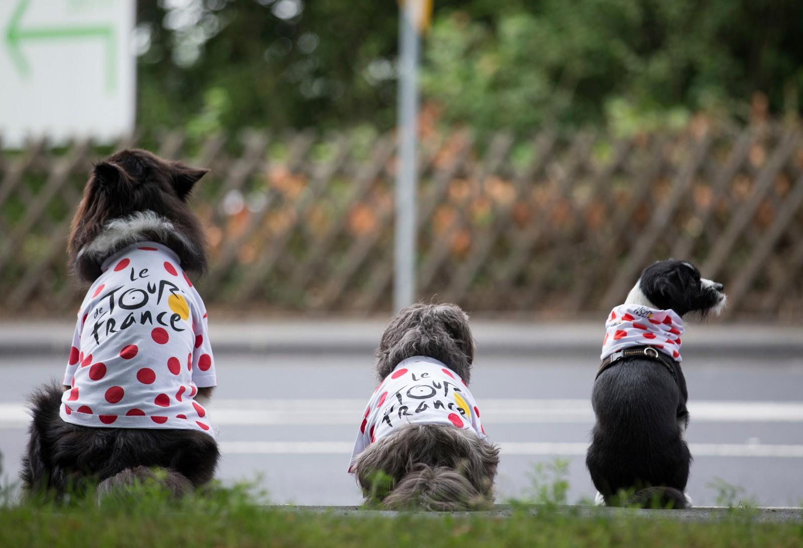 Tre hunder venter på det forbipasserende Tour de France-sirkuset, i Mettman, Tyskland.