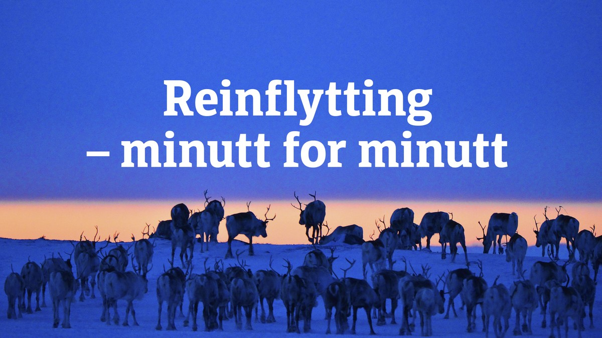 「Reinflytting – minutt for minutt」的圖片搜尋結果