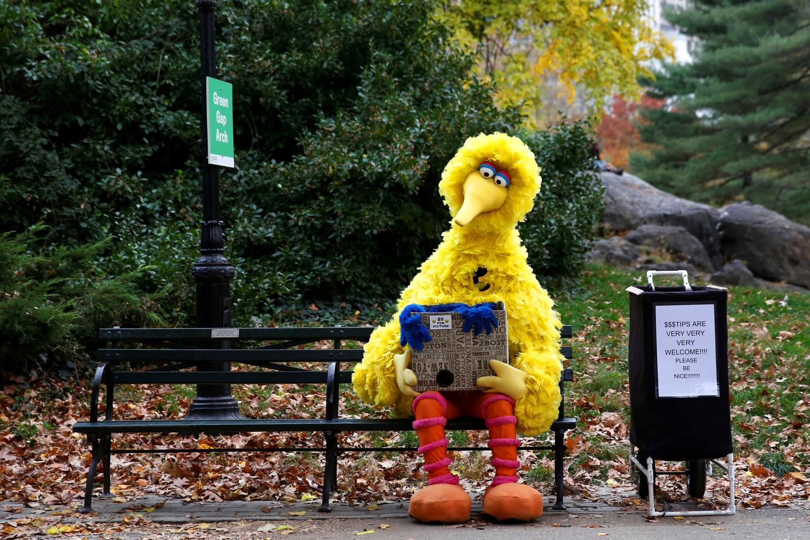 Litt trist? En mann kledd ut som Big Bird fra Sesame Street sitter i en park og håper at noen vil ta et bilde med han.
