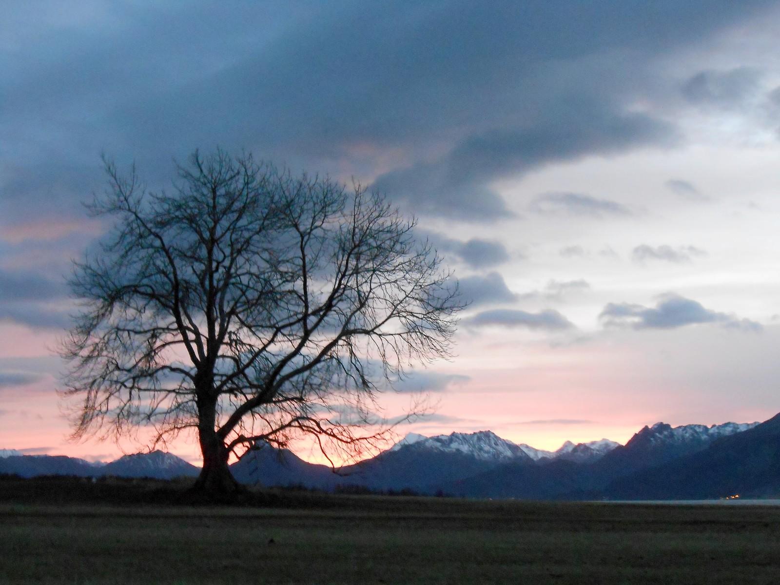 Et vakkert tre sett i vakker natur på Grytting.