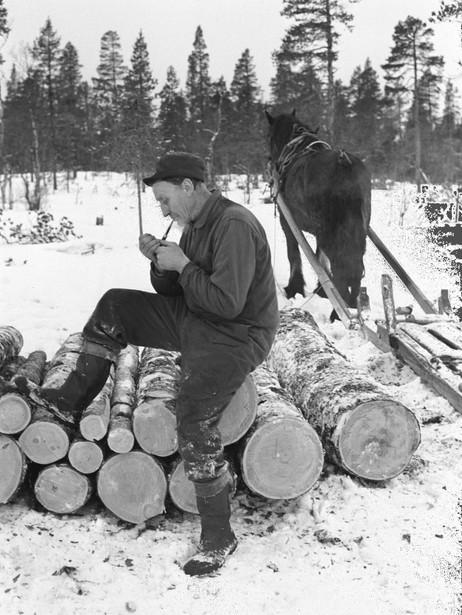 SKOGBRUK: Grane har lange tradisjoner for drift av skogen. Foto: Aage Storløkken / Aktuell / SCANPIX