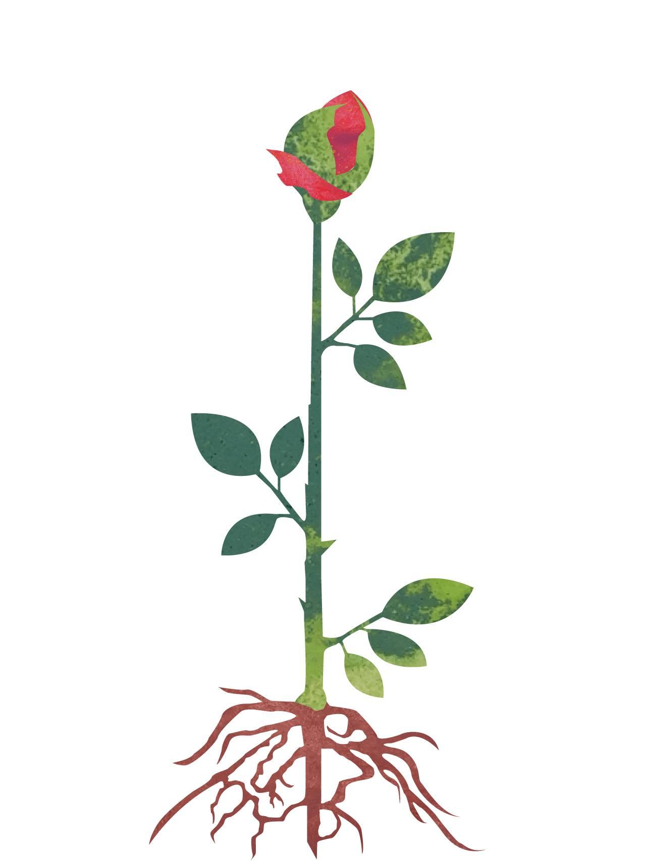 Planten har begynt å blomstre