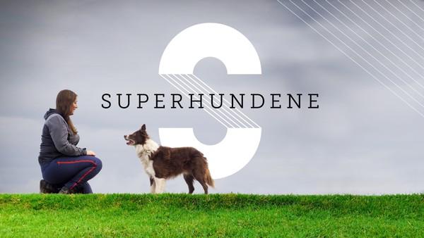 Åtte forlatte hunder får en ny sjanse når mennesker med fysiske og psykiske utfordringer trenger en ny venn og hjelper. Norsk dokumentarserie.