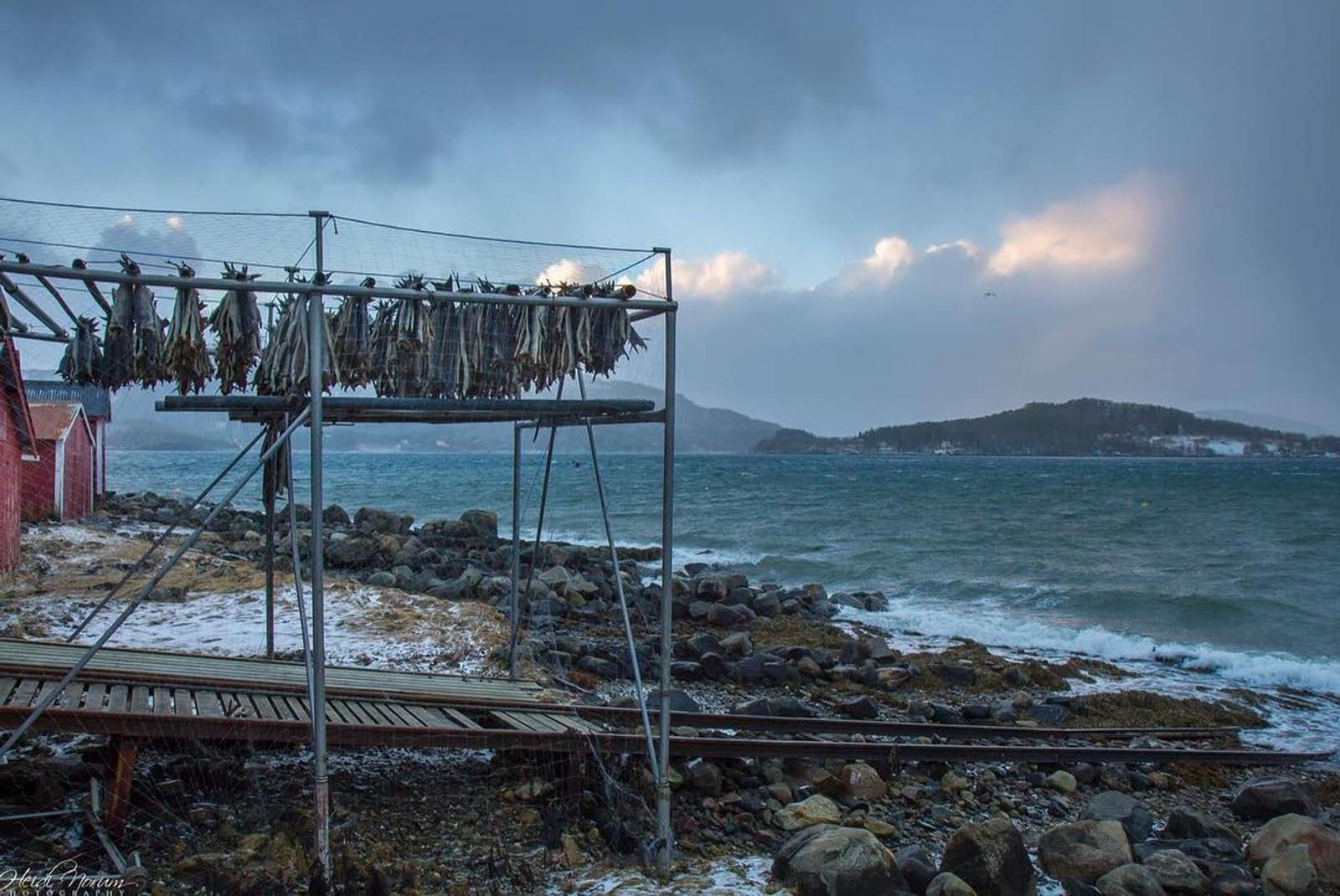 Vind og god tørke på hjellane på Meløy.